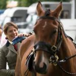 Perth Show…05.08.16 Rachel Fenton from Perth grooming her horse 'Justice' in preparation for the show Picture by Graeme Hart. Copyright Perthshire Picture Agency Tel: 01738 623350  Mobile: 07990 594431