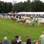 Perth Show…06.08.16 The parade of Champions in the main showring Picture by Graeme Hart. Copyright Perthshire Picture Agency Tel: 01738 623350  Mobile: 07990 594431