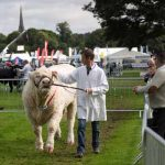 Perth Show…06.08.16 A Charolais bullis paraded round the show ring Picture by Graeme Hart. Copyright Perthshire Picture Agency Tel: 01738 623350  Mobile: 07990 594431