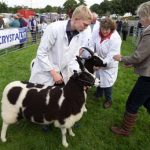 Perth Show…06.08.16 Jacob sheep being judged Picture by Graeme Hart. Copyright Perthshire Picture Agency Tel: 01738 623350  Mobile: 07990 594431