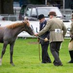 Perth Show…05.08.16 Ogilvy Webster from Abernethy shows his foal Laighlands Birlin Sporrans to judges John Newborough and Jane Collins. Picture by Graeme Hart. Copyright Perthshire Picture Agency Tel: 01738 623350  Mobile: 07990 594431